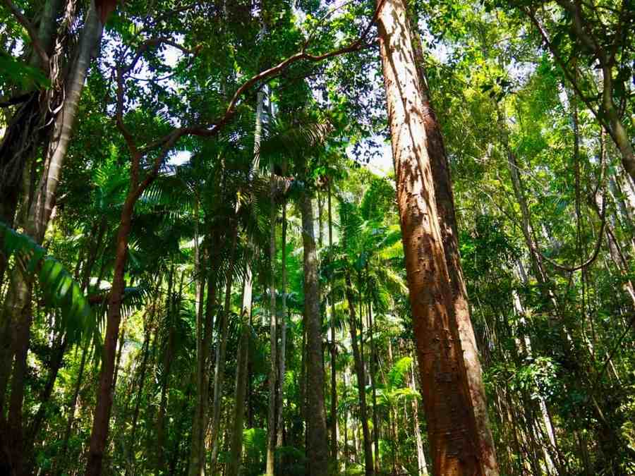 They include trees that produce food like cocoa, banana, pawpaw or papaya and sugar cane. Fraser Island Rainforest Trees Sand Dunes And Beaches