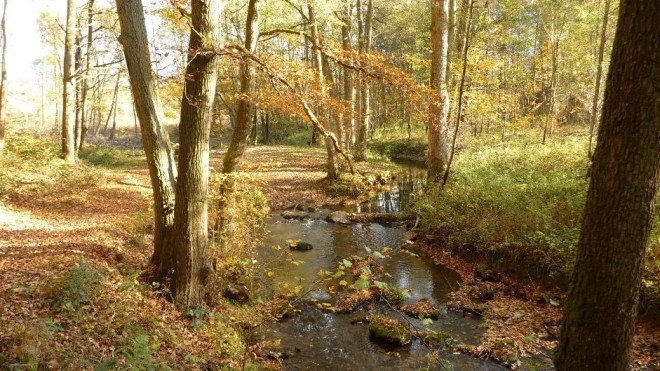 River Rau 2