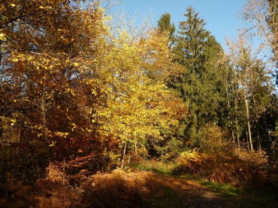 Colours of the forests near Outrelouxhe, Belgium