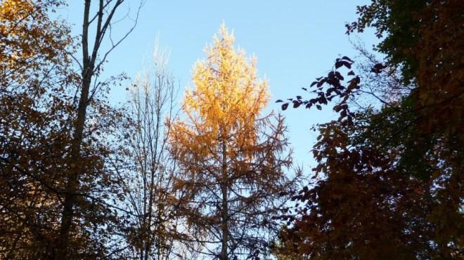 treetop2