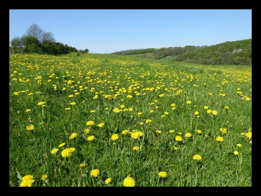 Voerstreek-meadows-new