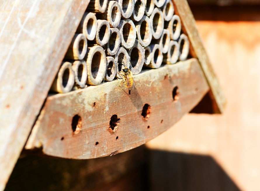 A bee hotel is a great eco project during the coronavirus lockdown