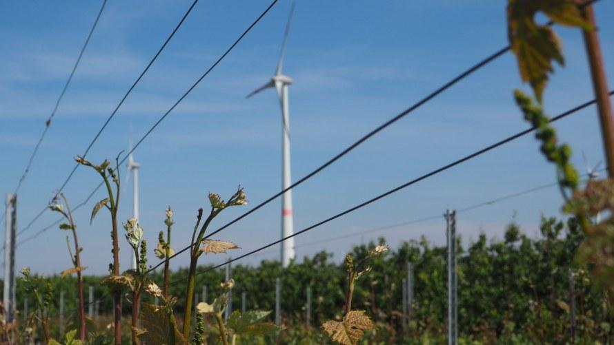 Promenez-vous de Diest à Loksbergen à travers le parc éolien de Halen-Diest