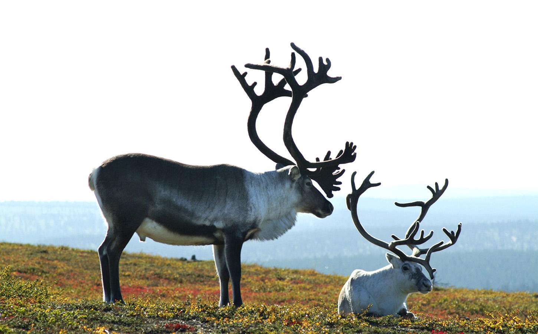 Finnish Wildlife Animals Amp Plants In Finland