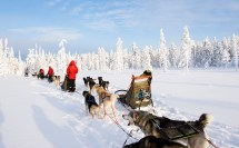 Safaris Finland Winter Activities Discovering