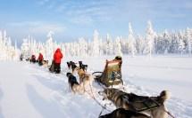 Safaris Finland Winter Activities Discovering