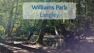 Williams Park Adventure