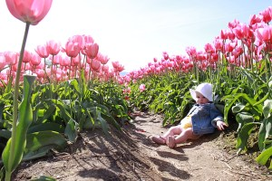 Places to See: Abbotsford Tulip Festival