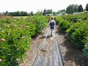 Places to See: Local Peony Garden
