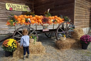 Places to See: Willow View Farms