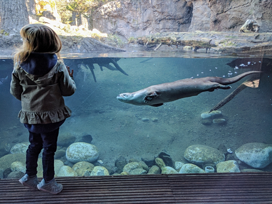 Family Day: Woodland Park Zoo, photobombed by a river otter