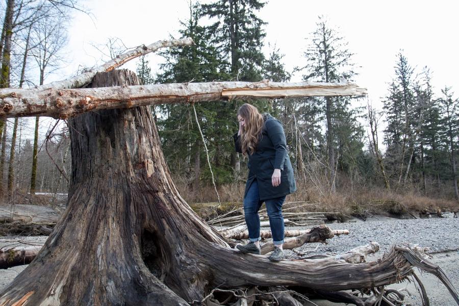 Squamish River Estuary, climbing an old tree stump
