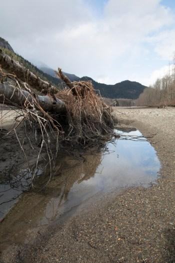 Squamish River Estuary, fallen tree