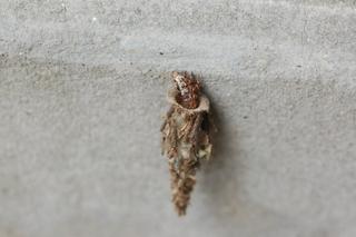 Bagworms In Florida - Idee per la decorazione di interni - coremc us