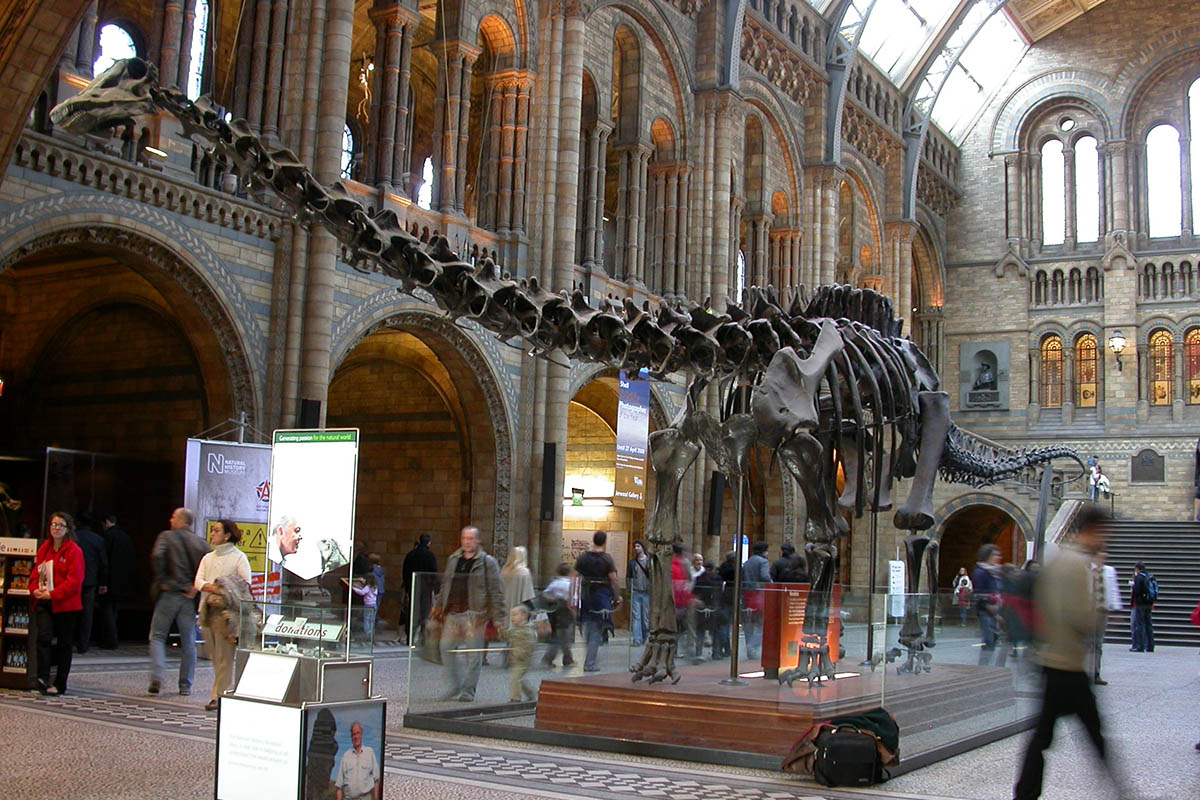 Discover London - Family tours - National History Museum