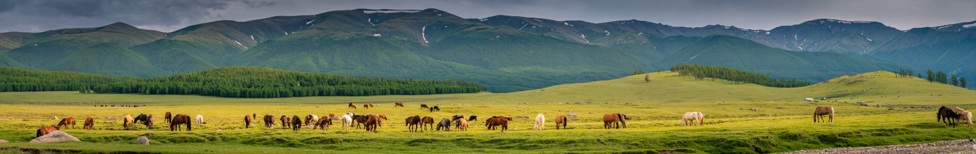 Frequently Asked Questions Mongolia Travel