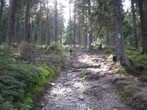 Lots and lots of 'up'  Mountain hiking trail, Jeseniky mountains, North Moravia, Czech Republic