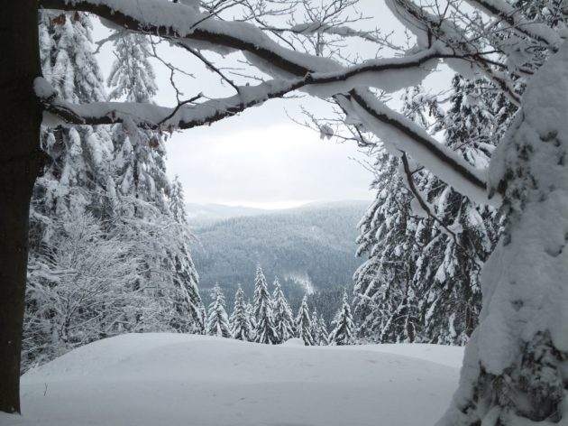 Cross-Country Skiing trail, Beskydy Mountains, Czech Republic.