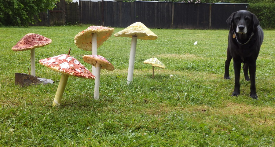 Pohadkovy Les - Fairytale Forest. Czech traditions. The mushrooms have lost their magic for Our Dog.