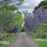 Trinidad's Botanical Gardens. Photo: Ayanna Young