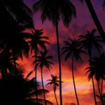 Coconut trees are foregrounded by a dramatic Mayaro sunset. Photographer: Marc Seyon
