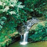 A beautiful waterfall plunge pool. Photographer: Noel Norton