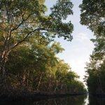 The Caroni Swamp in Central Trinidad. Photographer: CafeMoka