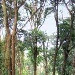 Tropical rainforest. Photographer: CafeMoka