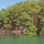 Bon Accord Lagoon & Mangrove Swamp on the Leeward Coast. Photographer: Oswin Browne
