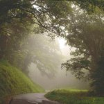 Misty morning in Tobago's Main Ridge Forest Reserve. Photo by Kevin Sammy