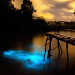 """At least once a decade, conditions at the Ortoire River in Mayaro become perfect for a bioluminescence show. Where salt and fresh water mix, a chemical reaction from a kind of plankton causes the river to light up with """"cold"""" blue light. The last major sightings took place over several weeks in 2014. Photo by Nyla Singh"""