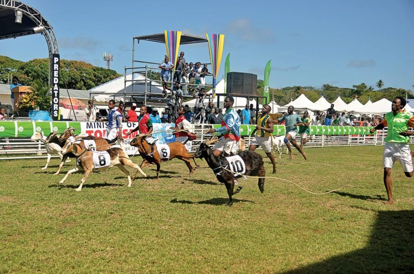 You can catch goat racing action at Easter time and during the Heritage Festival each July. Photo courtesy THA