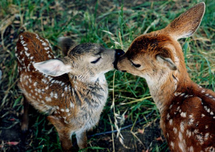 sponsor baby animals wildcare