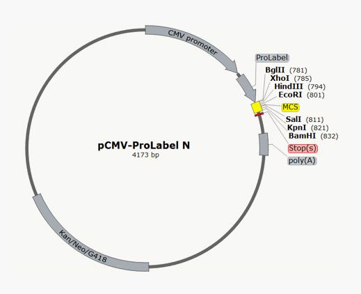 pCMV-ProLabel® N Vector