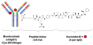 "C) brentuximab vedotin. An ADC is a three-block ""engine"" -- antibody-linker-drug -- and each part of the composite molecule has to be carefully selected and assembled. Considered as an armed-antibody, an ADC is a bi-dentate construction where both parts (antibody and drug) of the molecule combine their effect to ensure selectivity and potency. The role of the linker arm is of paramount importance demanding a fine tuning to execute the controlled release and delivery of the two active components in the tumor environment."