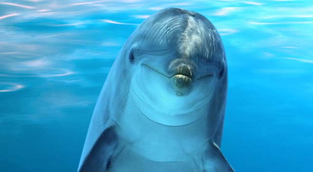Cute Baby Dolphin Wallpaper Dolphins