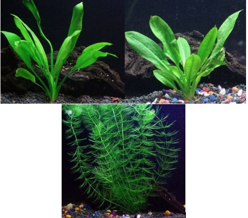 live aquarium plant bundle