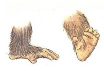 gorillino