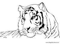Tigre Da Colorare E Stampare Shere Khan La Tigre