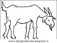 Disegno capra: animali da colorare