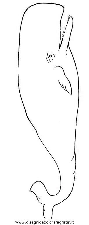 Disegno balena_balene_17 animali da colorare.