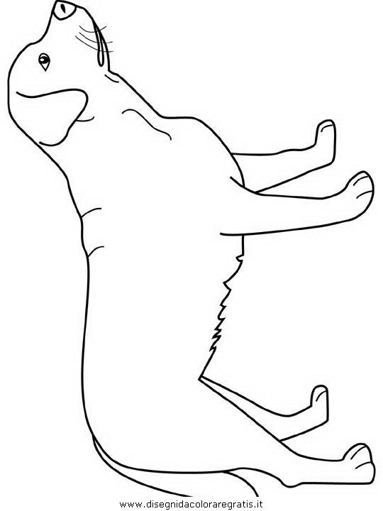 Disegno labrador animali da colorare