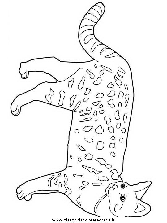 Disegno Birman Animali Da Colorare