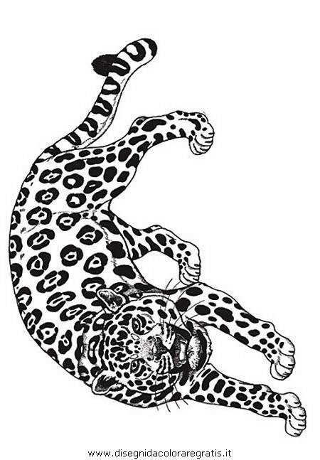 Disegno tigre_15: animali da colorare