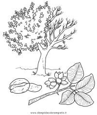 Disegno pistacchio categoria natura da colorare