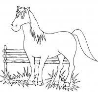 Disegni Da Colorare Di Cavalli Cavalli Da Colorare