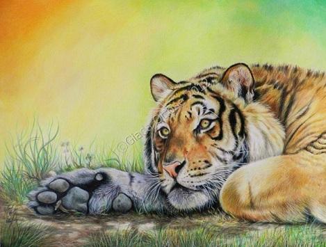 Colorare una Tigre con le Matite Colorate  Disegno  Pittura