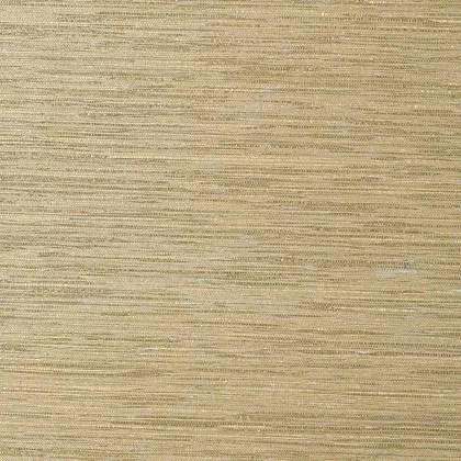 T41119