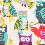 Owl Always Love you BUHO SIEMPRE TE AMO