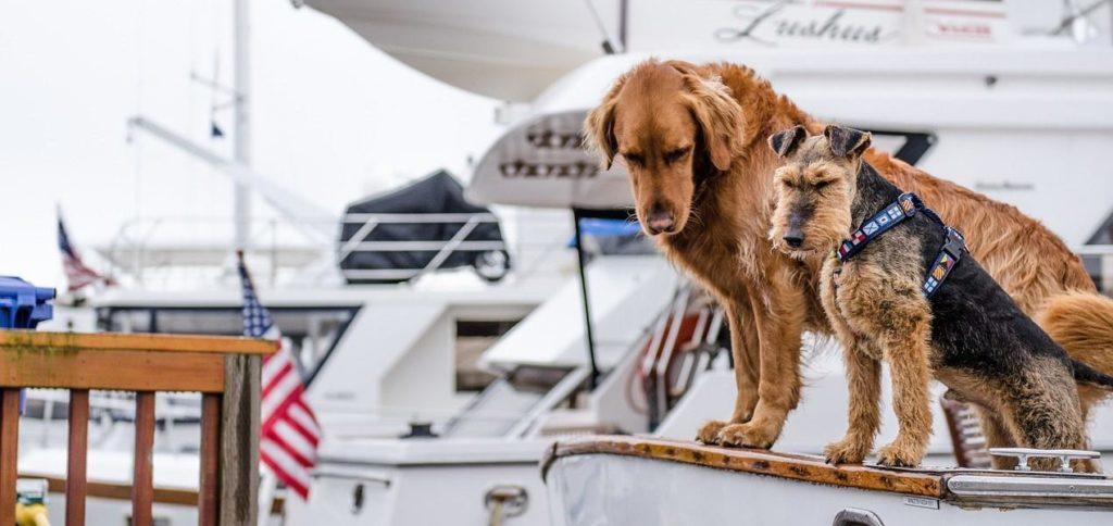 Viajar con mascotas en avión, tren, barco y colectivo